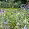 Stauden - Beet - Franks kleiner Garten