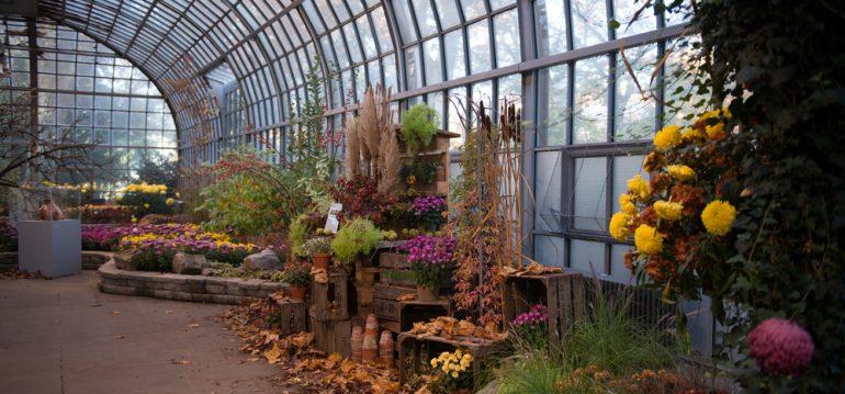 Oktober - Frankfurt- Franks kleiner Garten