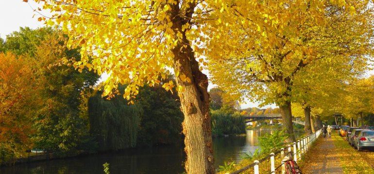 Oktober - Herbst - Franks kleinerr Garten