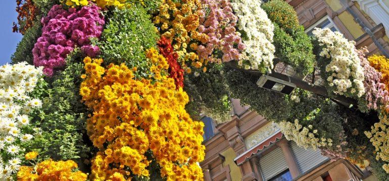 Oktober - Lahr - Franks kleiner Garten