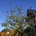 Baumschnitt - mein Garten - Franks kleiner Garten