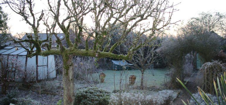 Garten im Winter - Gewächshaus - Franks kleiner Garten