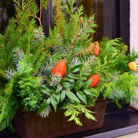 Garten im Winter - Fensterbank - Franks kleiner Garten