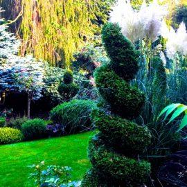 Märchengarten - Ostfriesland - Hans-Joachim Frank - Franks kleiner Garten