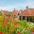 Krankheiten - Garten - Franks kleiner Garten