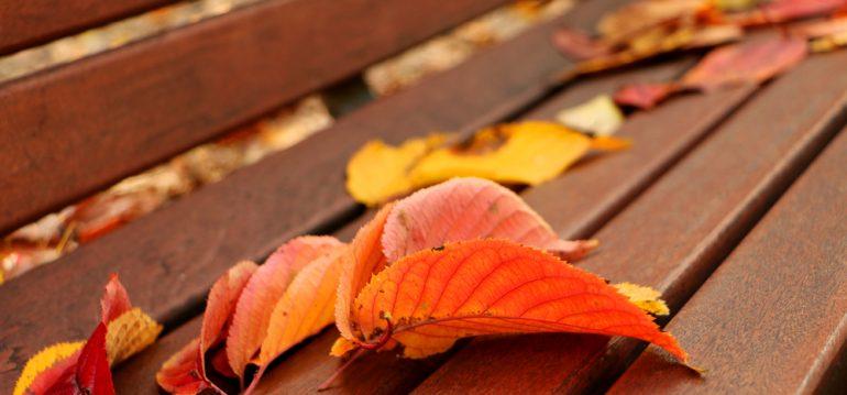 November - Titel - Franks kleiner Garten