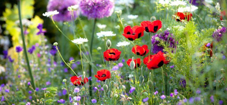 Pflanzenpaare - Titel - Franks kleiner Garten