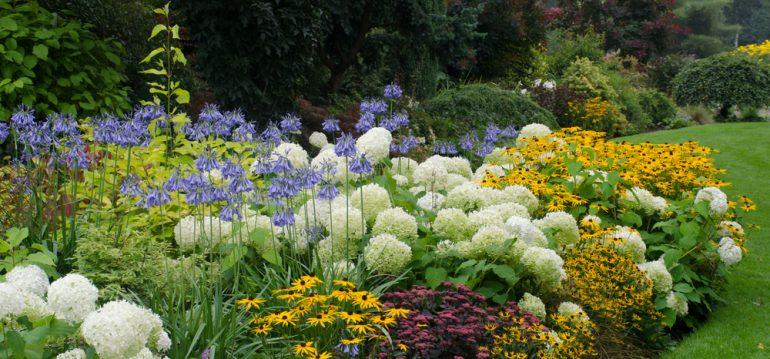 Traumgarten – Hortensien -- Sonnenhut - Franks kleiner Garten