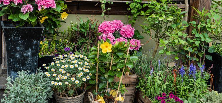 Traumgarten - Pflanzenkauf - Franks kleiner Garten