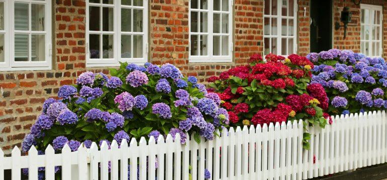 Vorgarten - Hortensien - Sommer - Gartenzaun - Franks kleiner Garten