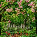 Vorgarten - Rosen - Paris - Franks kleiner Garten