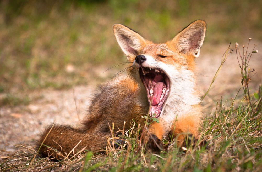 Wildtiere Im Garten Fuchs Franks Kleiner Garten Willkommen In