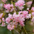 traumhafte magnolien 6 wichtige pflegetipps willkommen in franks kleinem garten. Black Bedroom Furniture Sets. Home Design Ideas