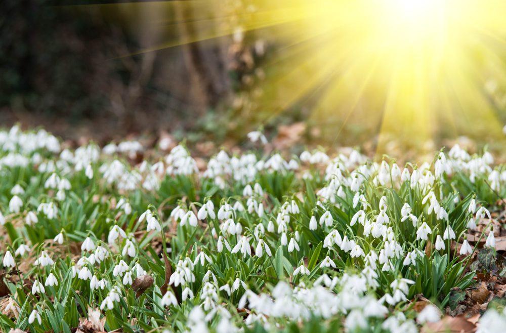 Marz Termine Schneeglockchen Franks Kleiner Garten