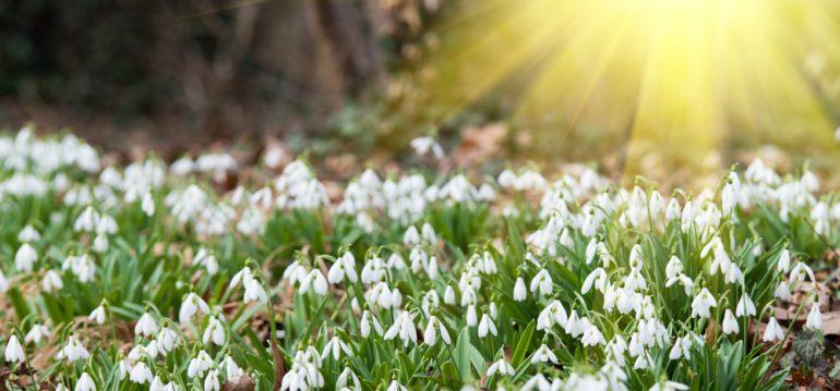 März - Termine - Schneeglöckchen - Franks kleiner Garten