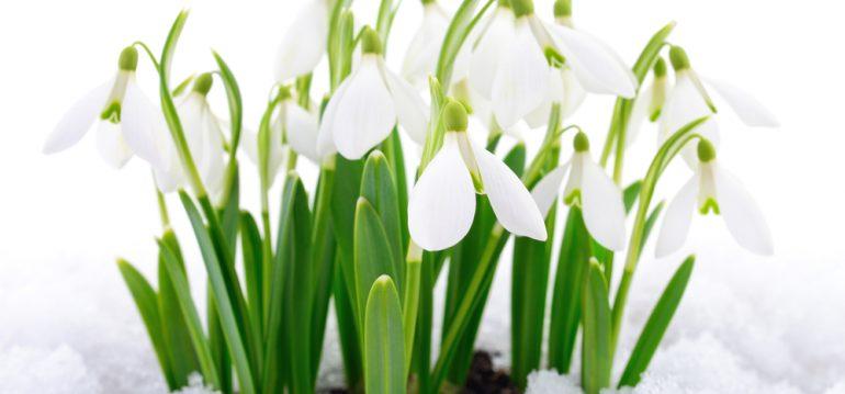 Frühling - Februar - Schneeglöckchen - Franks kleiner Garten