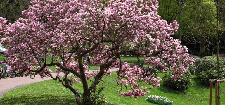 Termine - Februar - Wiesbaden - Franks kleiner Garten