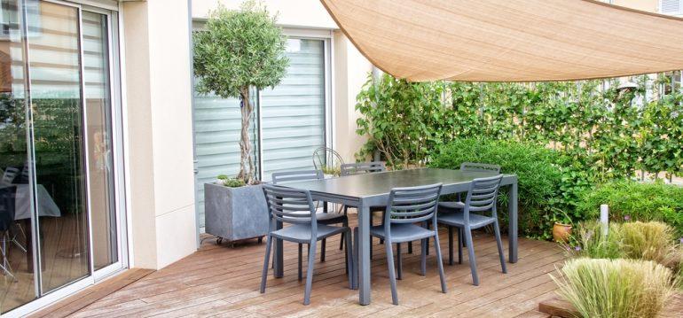 Kübelpflanzen - Olivenbaum - Franks kleiner Garten