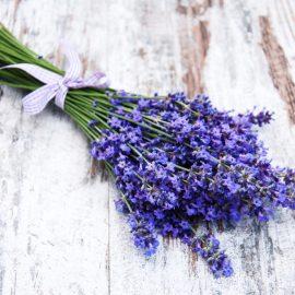 Lavendel - Ernte - Franks kleiner Garten