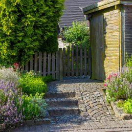 Lavendel - Vorgarten - Franks kleiner Garten