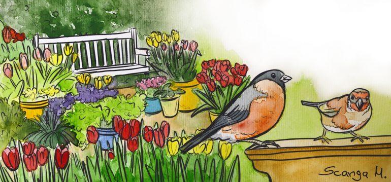 März - Illustration - Franks kleiner Garten
