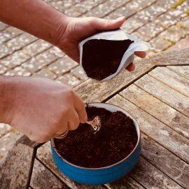 Produkttest - Romberg - Anzucht - Erde - Franks kleiner Garten 2