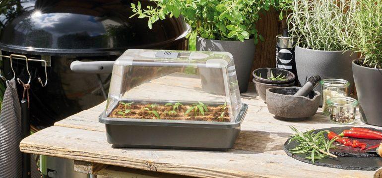 Produkttest - Romberg - Anzucht - Gewächshaus - 2 - Franks kleiner Garten
