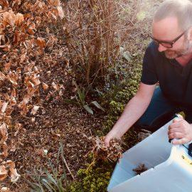Frühjahrsputz - Mulchen - Franks kleiner Garten
