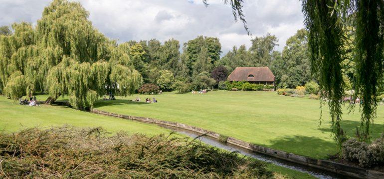 Moos - Rasen - Park - Franks kleiner Garten