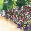 Mai- Illustration - Rosen - Franks kleiner Garten