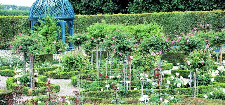 Mai - Termine - Herrenhausen - Franks kleiner Garten