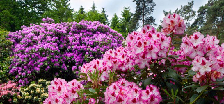 Mai - Termine - Westerstede - Franks kleiner Garten