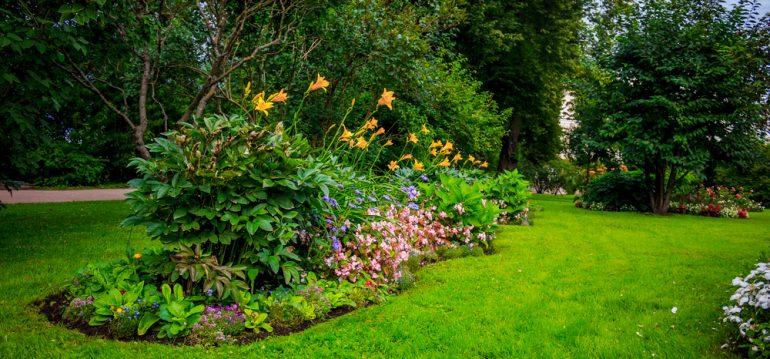 Sommerrasen - Beet - Franks kleiner Garten