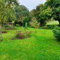 Sommerrasen - Garten - Franks kleiner Garten
