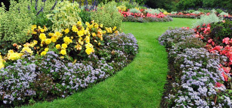Sommerrasen - Sommerbeet 2 - Franks kleiner Garten