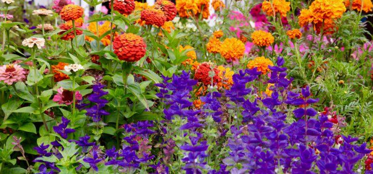 Stauden - Beet - England - Franks kleiner Garten