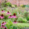 Stauden - Beet - Titel - Franks kleiner Garten
