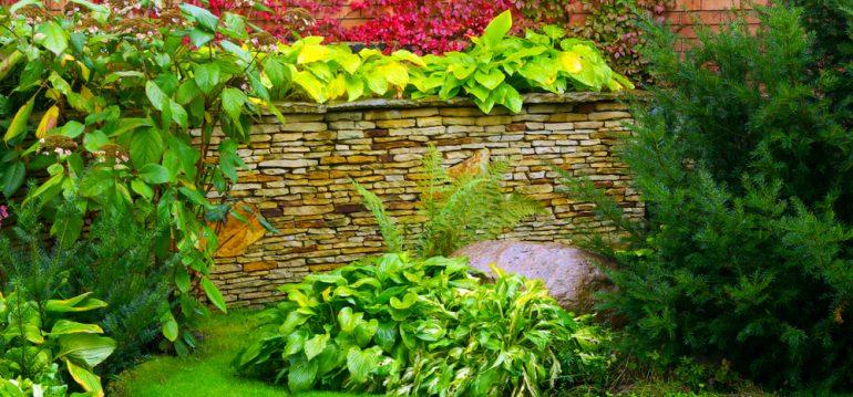 Stauden - Funkien - Franks kleiner Garten