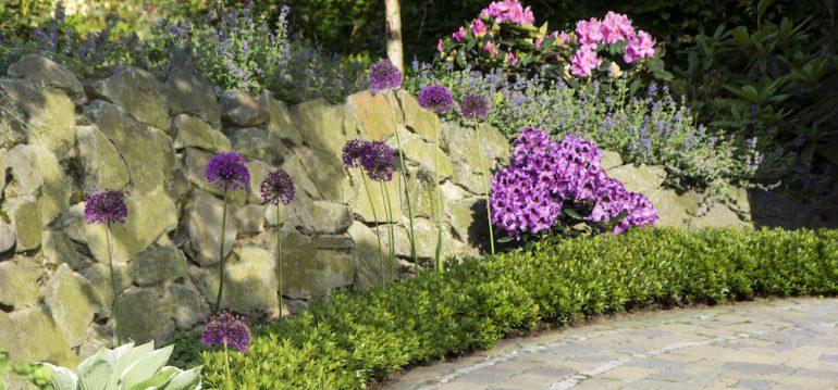 Bloombux® - Buchsbaum - Buchs - Rhododendron - Franks kleiner Garten