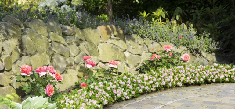 Juni - Bloombux® als Beeteinfassung - Franks kleiner Garten