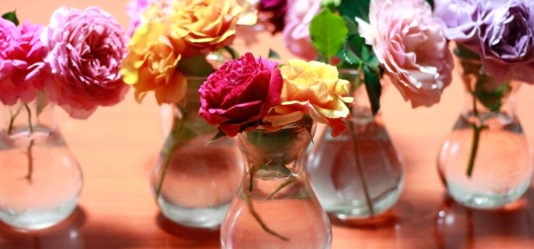 Juli - Rosen - Rosenfest - Vase - Franks kleiner Garten