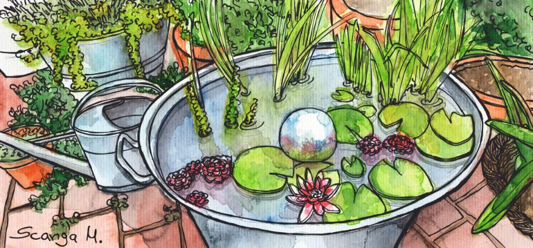 Juli - Illustration - Mini-Teich - Seerosen - Franks kleiner Garten