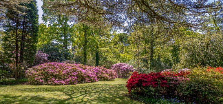 Mulchen - Rasen - Garten - Cottage Garden - Franks kleiner Garten