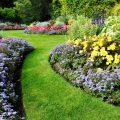 Rasen - Garten - Mulchen - Mulch - Franks kleiner Garten