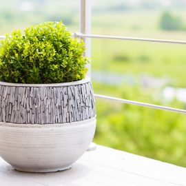 Schattenbalkon - Buxus - Buchsbaum - Franks kleiner Garten