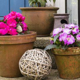 Schattenbalkon - Fleißiges Lieschen - Franks kleiner Garten