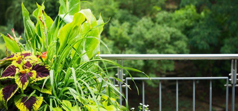 Schattenbalkon - Gräsermix - VICUSCHKA - shutterstock_1032604525 - Franks kleiner Garten