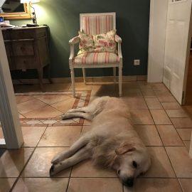 Sommer - Hitze - Fliesen - Bruno - Hund - Golden Retriever - Franks kleiner Garten