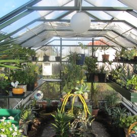 Gewächshaus – Hoklartherm – Innen – Pflanzregale – Franks kleiner Garten