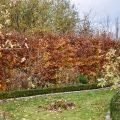 IKRA - Häcksler - Hecke - Franks kleiner Garten
